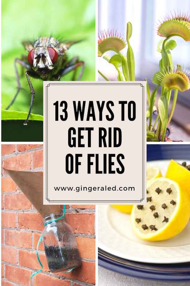 13 Ways to Get Rid of Flies