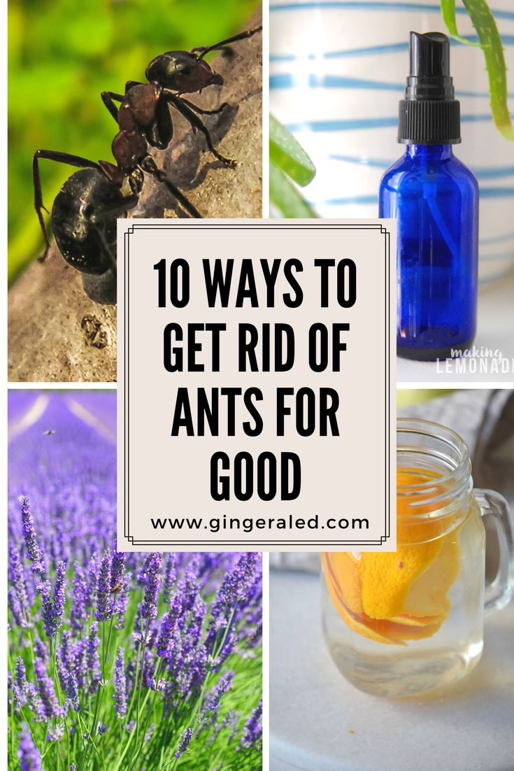 10 Ways to Get Rid of Ants for Good